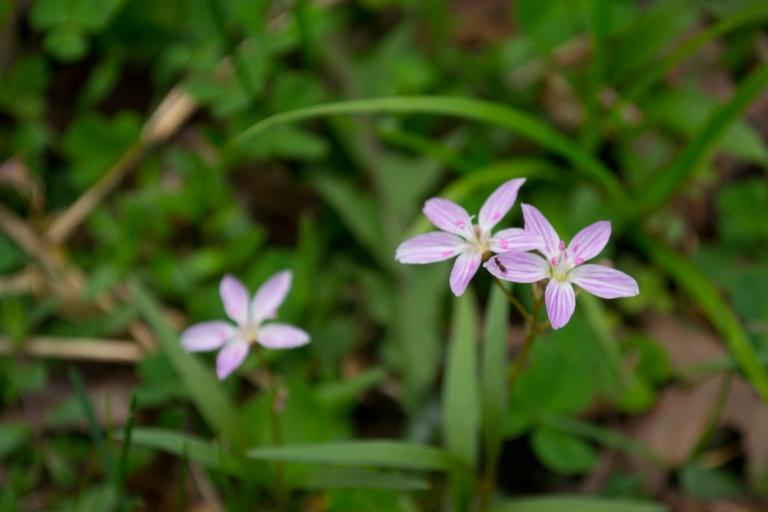 flower21-2